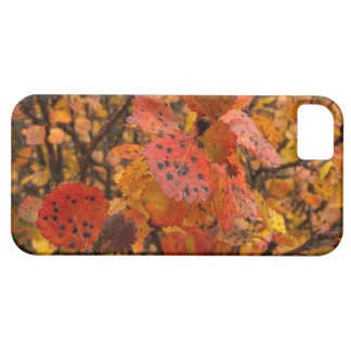 Flashy Fall Barely There iPhone 5 Case