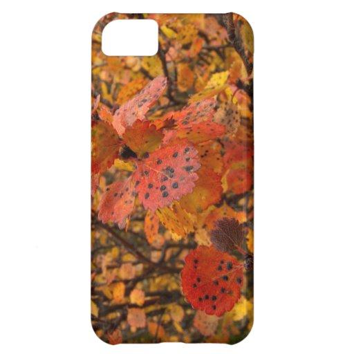 Flashy Fall iPhone 5C Case