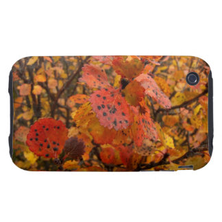 Flashy Fall iPhone 3 Tough Cases