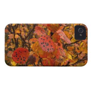 Flashy Fall iPhone 4 Covers