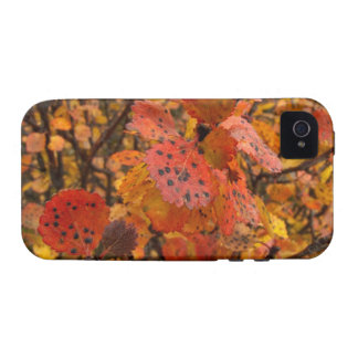 Flashy Fall Vibe iPhone 4 Cover