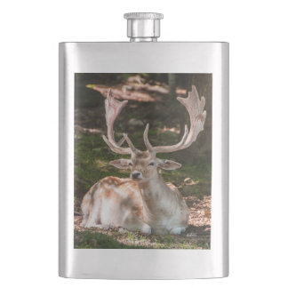 Flask photo stag under wood