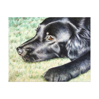 Flat Coated Retriever Canvas Prints