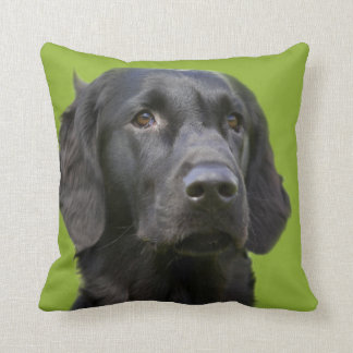 Flat Coated Retriever dog, black beautiful photo Cushions