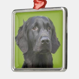Flat Coated Retriever dog black, beautiful photo Silver-Colored Square Decoration
