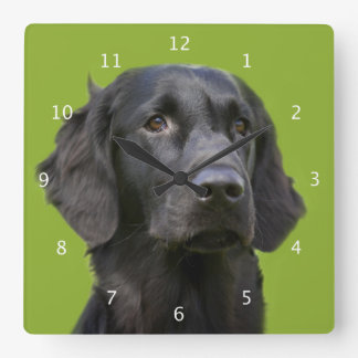 Flat Coated Retriever dog black, beautiful photo Wallclocks