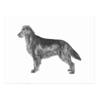 Flat Coated Retriever Postcard