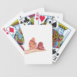 Flat hand showing model human kidney poker deck