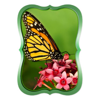 """Flat Note Card - Monarch Butterfly Nature Photo 5"""" X 7"""" Invitation Card"""