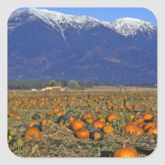 Flathead Valley Montana Pumpkin patch Square Sticker