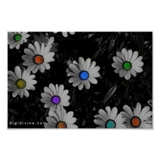 Flavored Daisies Poster
