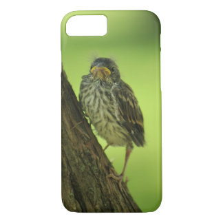 Fledging Chipping Sparrow iPhone 8/7 Case