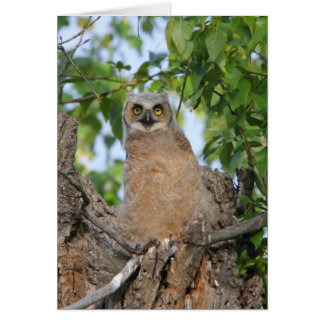 Fledgling Great Horned Owl Card