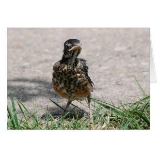 Fledgling Robin with Attitude Card