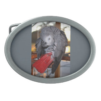 Flexible Congo African Grey Parrot with Red Tail Oval Belt Buckles