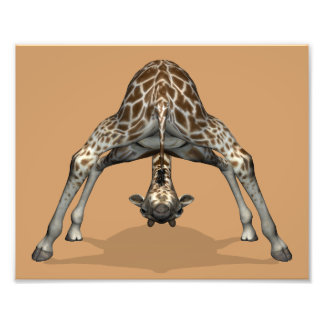 Flexible Giraffe Art Photo