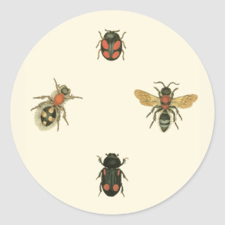 Flies and Beetles by Vision Studio Classic Round Sticker