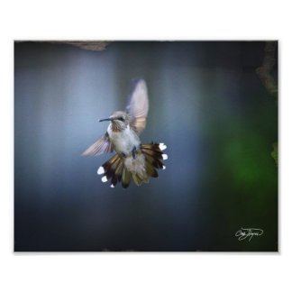 Flight of the Angel Photo