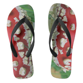 FlipFlop's from the summer to the late autumn! Thongs