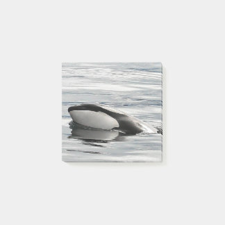 Flirty Orca Calf Post-it-notes Post-it Notes
