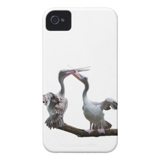 Flirty Pelicans iPhone 4 Case (choose your colour)