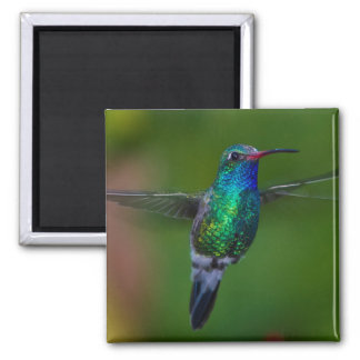 Floating Hummingbird Magnet