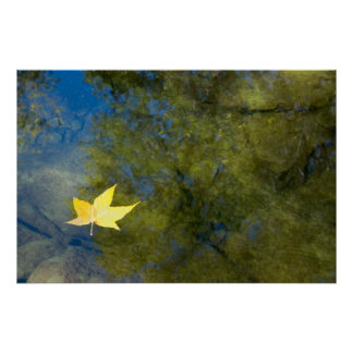 Floating Leaf Poster