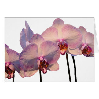 Floating Orchids Invitation Greeting Card