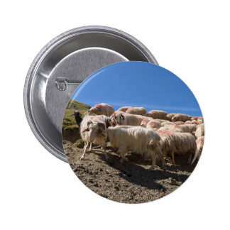 Flock of Basco Bearnaise Sheep at Arbaze Mountain 6 Cm Round Badge