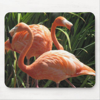 Flock of Flamingos Mouse Pad