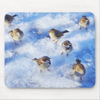 Flock of House Sparrows 'Passer domesticus' on Mouse Pad