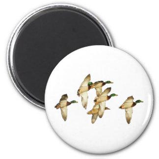 Flock of Mallards in Flights- Ducks 6 Cm Round Magnet