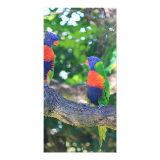 Flock of Rainbow lorikeets on a branch of a Tree Customized Photo Card