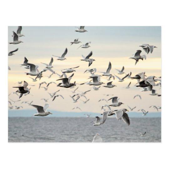 Flock of Seagulls Photo Postcard