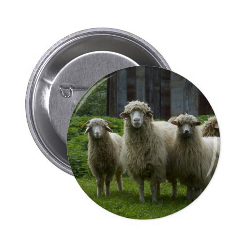 Flock of Sheep Button