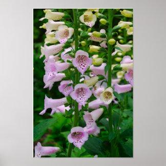 Flora Poster -  2