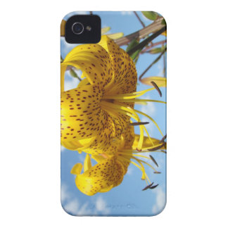 Floral Blackberry Bold cases Flowers Lilies Yellow