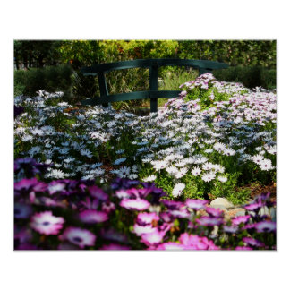 """Floral Bridge"", African Daisies Poster"