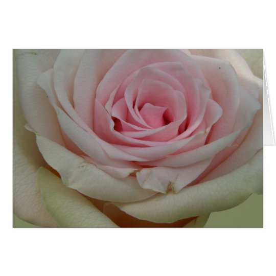 Floral card with romantic rose