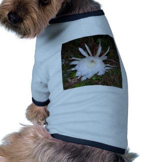 floral creations pet t shirt