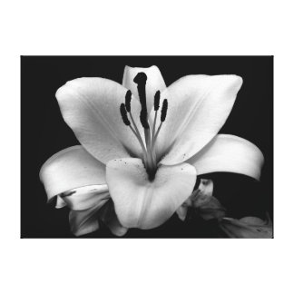 Floral Custom 24 X 18 Canvas Canvas Prints