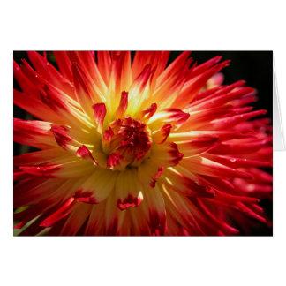 Floral Firework Card