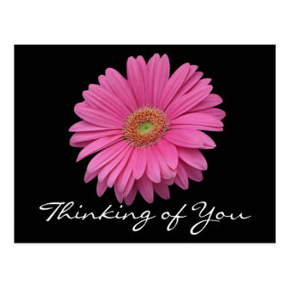 Floral Gerbera Daisy Pink Flower Thinking of You Postcard