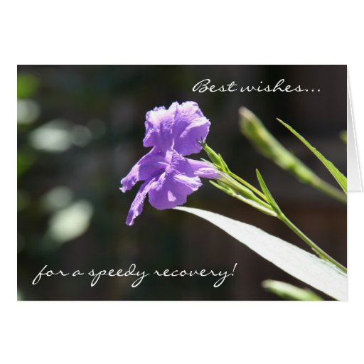 Floral Get Well Card,  Purple Bloom in Sunlight