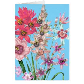 Floral Illustration Drawing Vintage Printed Art Card