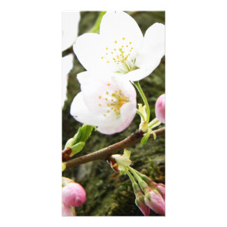 Floral Ladies Photo Cards