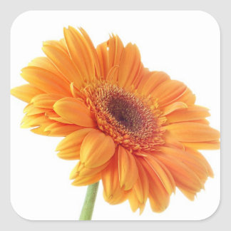 Floral Orange Gerbera Daisy Flower Wedding Party Square Sticker