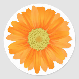 Floral Orange Gerbera Daisy Flowers Classic Round Sticker