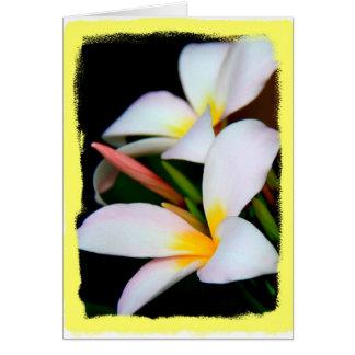 Floral, Plumeria Bloom on Black w/ Yellow Border Card