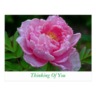 """FLORAL POSTCARD, """"PINK PEONY/THINKING OF YOU"""" POSTCARD"""